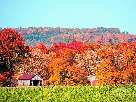 Gena Weiser - Wayne County Ohio Autumn