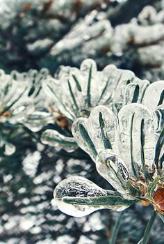 We are all frozen by Victoria  Kostova