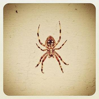 We Have Of These Hanging Out On One Of by Deirdre Ryan