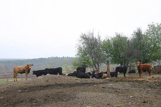 Nina Fosdick - We Herd You