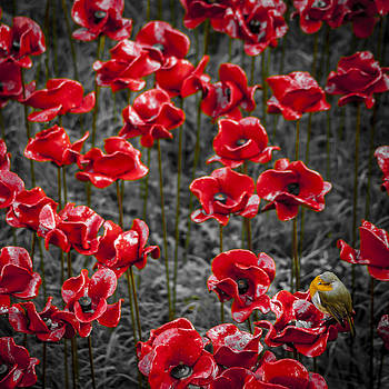 We will remember them by S J Bryant