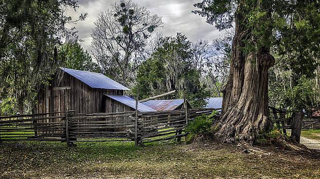 Lynn Palmer - Weathered Cracker Barn and Gnarled Southern Red Cedar
