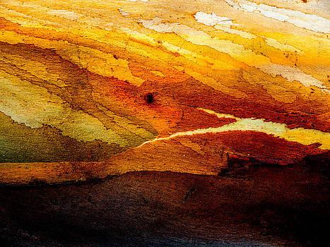 Hakon Soreide - Weathered Wood Landscape