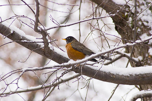 Weathering the Cold by Chad Davis
