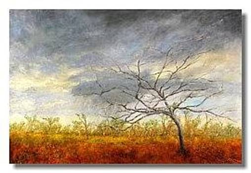 Weathering the Storm by Liron Sissman