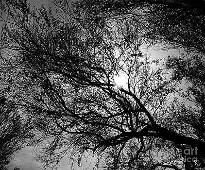 Tracey McQuain - Web of Branches