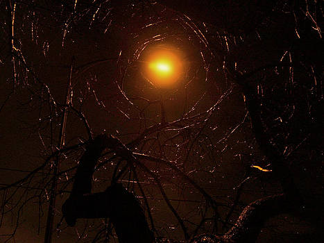Randal Bruck - Web of Light
