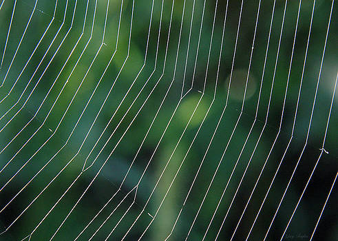 Web Site by Greg Taylor