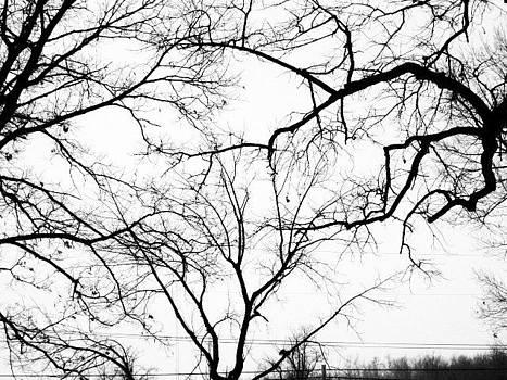 Web Tree by Karma Gurung