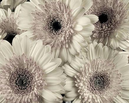 Wedding Bouquet -Gerbera Duotone by Randy Grosse