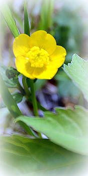 Wee Wildflower by Jo Anna Wycoff