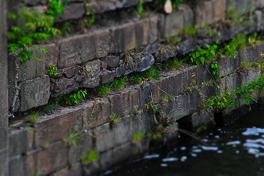 Weeds in the Wall by Graham Hayward