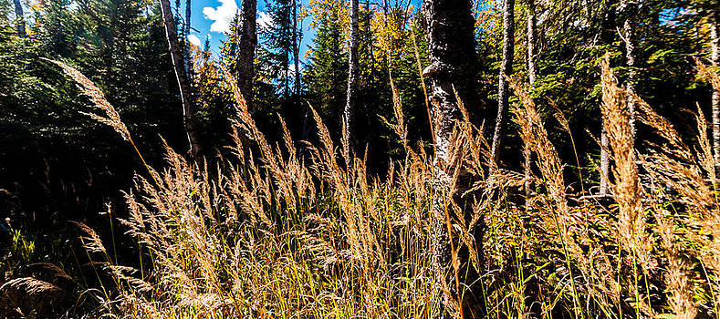 Weeds at Northshore Drive by Lonnie Paulson