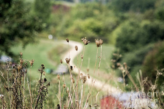 Weeds by TommyJohn PhotoImagery LLC