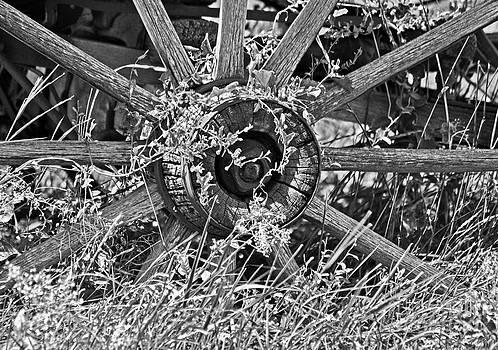 Weedy Wheel  by Juls Adams