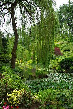 Marilyn Wilson - Weeping Willow Tree