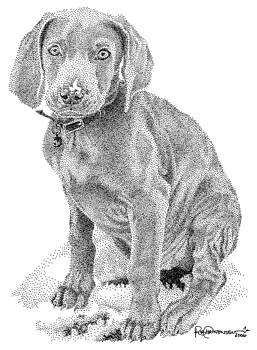 Weimaraner by Rob Christensen