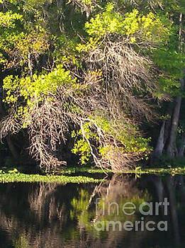 Wekiva River  by Terri West