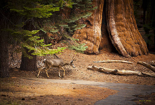 Welcome home - Sequoia National Forest by Angela A Stanton