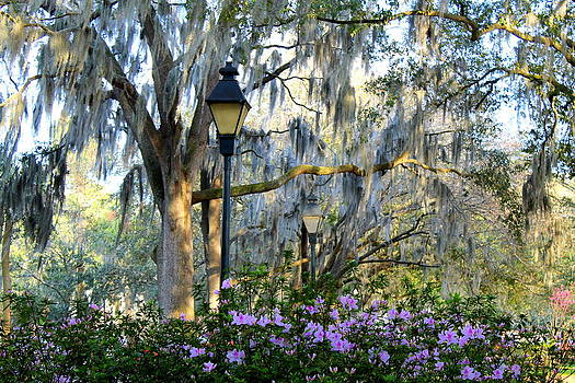 Welcome to Forsyth Park by Kay Mathews
