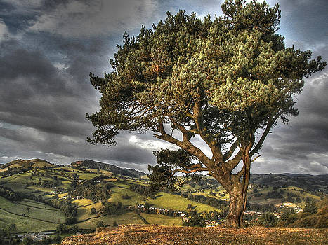 Welsh Tree by    Michaelalonzo   Kominsky