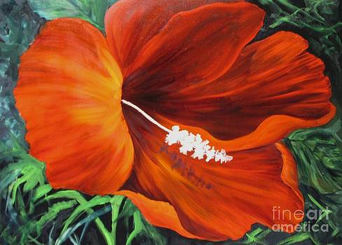 Wendy's Red Hibiscus by Barbara Haviland