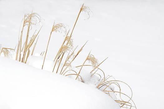 West Falls Winter Grass by Don Nieman