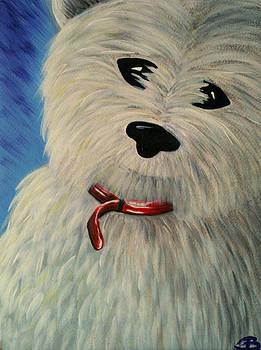 West Highland White Scottish Terrier by Beril Sirmacek