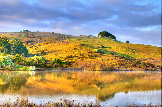 West Marin Morning by Alberta Brown Buller