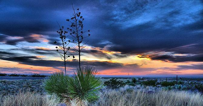 West Texas Yuccas by John Dickinson