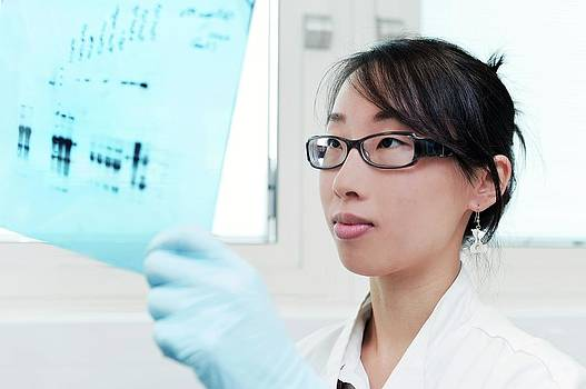 Western Blot Protein Analysis by Mcs