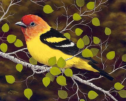 Western Tanager by Rick Bainbridge