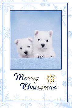 Waldek Dabrowski - Westie Christmas card
