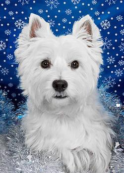 Westie Holiday Portrait by Heidi Marcinik