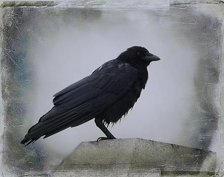 Gothicrow Images - Lone Wet Blackbird