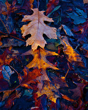 Wet Leaf Layers by David Frankel