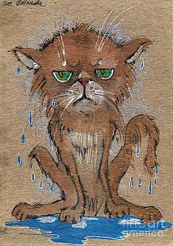 Angel  Tarantella - wet persian cat