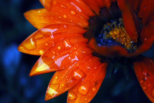 Wet Petals by Lori Tambakis