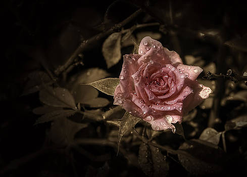 Wet Rose by Leonardo Marangi