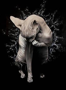 Wet Sphynx by Stephanie LeVasseur