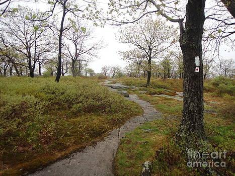 Wet Trail by Ara Wilnas