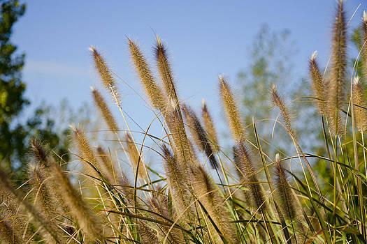Wetland Grass1 by James Blackwell JR