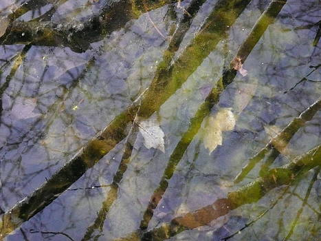 Angela Hansen - Wetland Reflections