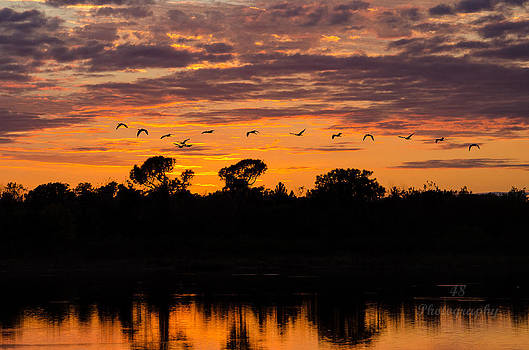 Wetland Sunset 3 by Brian Manley