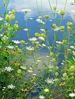 Wetland Wildflowers by Rita Mueller