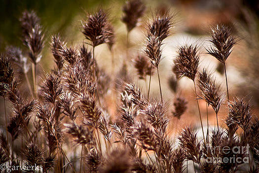 Wetlands Brush by  Garwerks  Photography