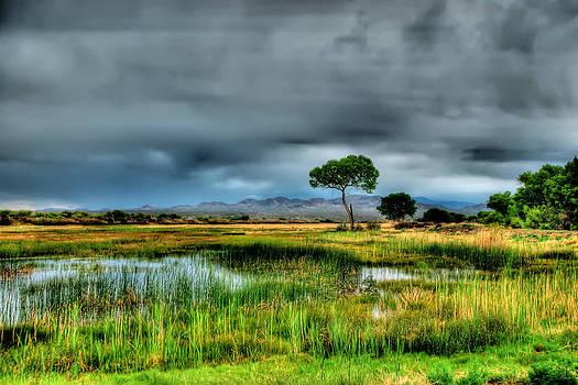Wetlands by Helene Kobelnyk