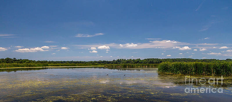 Wetlands II by Bernd Laeschke