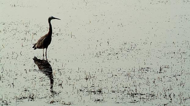 Wetlands Stalker by Douglas Jones