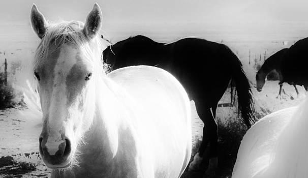 Wh5 by Wynema Ranch